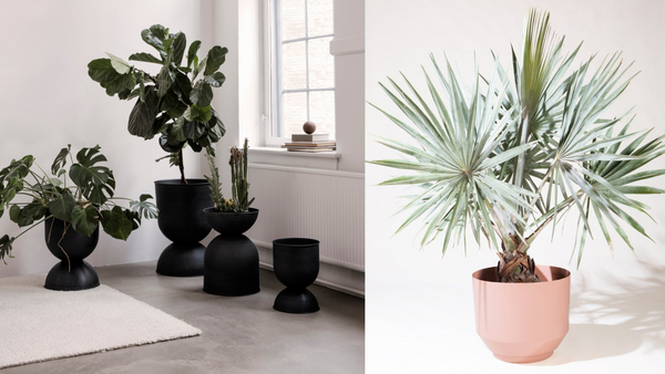 Gift Guide For Plant Lovers
