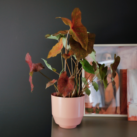 Shelf styling - how to style shelves | Spun Peach Self Watering Plant Pot - Yield Design