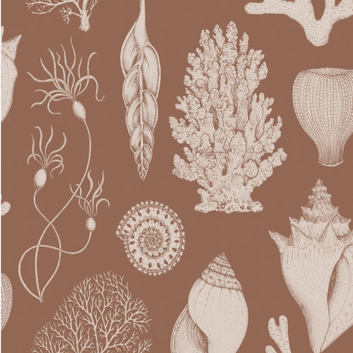 Ferm LivingKatie Scott Wallpaper Shells Toffee - Batten Home