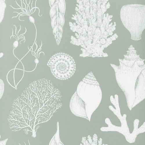 Ferm LivingKatie Scott Wallpaper Shells Aqua - Batten Home