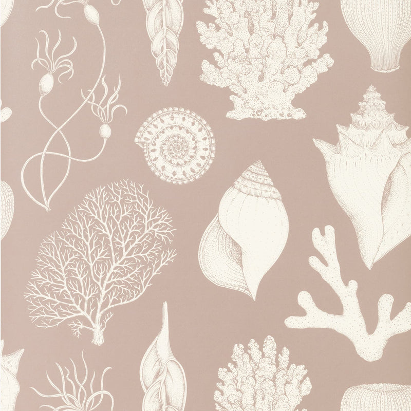 Ferm LivingKatie Scott Wallpaper Shells Dusty Rose - Batten Home