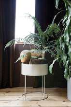 Load image into Gallery viewer, Ferm LivingPlant Box Round - Batten Home