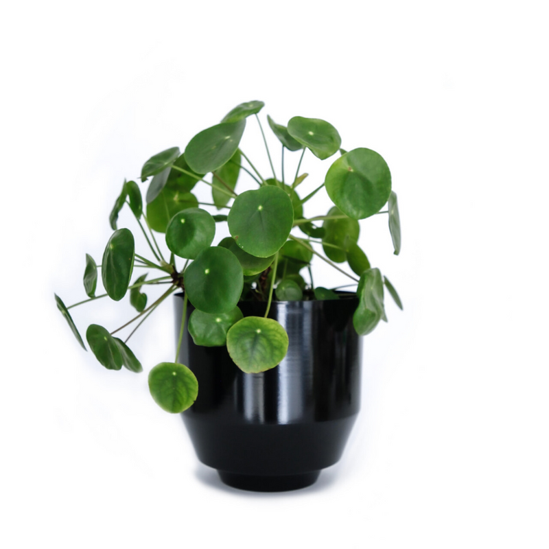 Yield DesignSpun Planter Small - Black - Batten Home