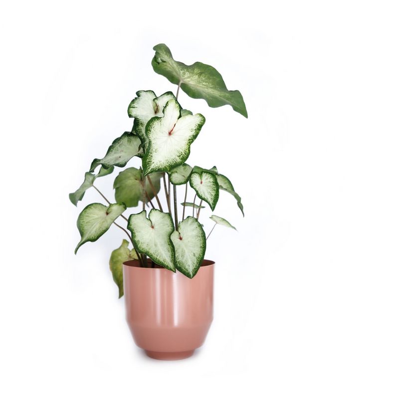 Yield DesignSpun Planter Small - Peach - Batten Home