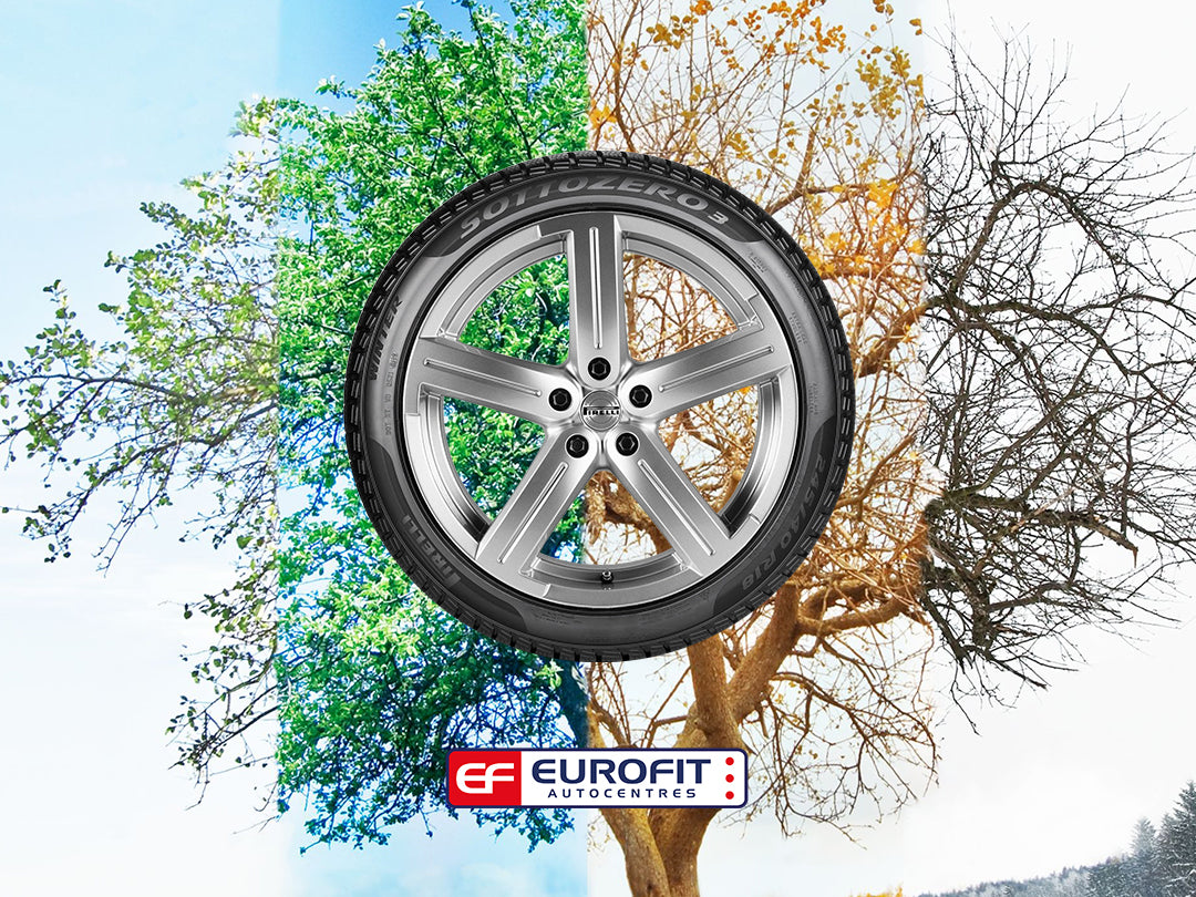 Car tyre on background tree going through all seasons