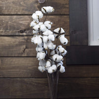 Antea Decor Cotton Stems 6 Pack - Rustic Cotton Flowers - Perfect for Farmhouse Fall Decor - 10 Balls Per Stem - 21 Inches