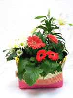 Easter Plants Basket