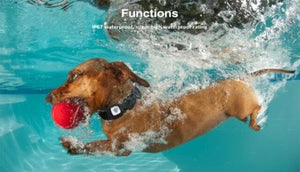 a swimming wearing smart pet collar GPS tracker