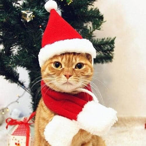 cat Christmas costumes Santa Claus red scarf hat