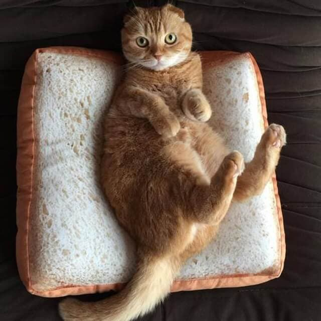 simulation boast bread cat mat