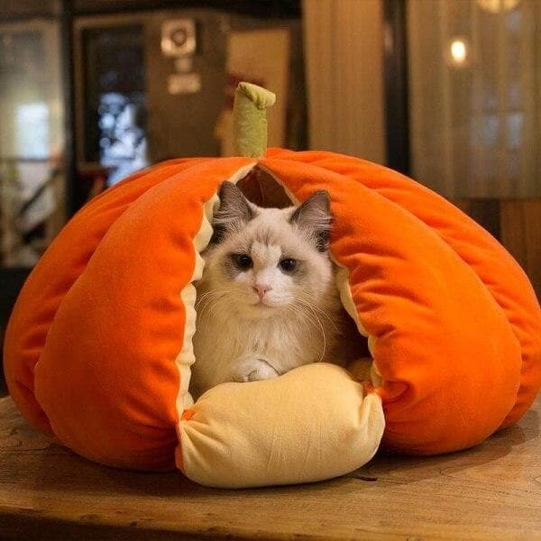 [SALE] Extra Plush Cat Pumpkin Bed