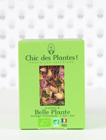 infusion belle plante