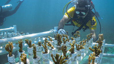 Coral Nursery - A Way to Restore Marine Life