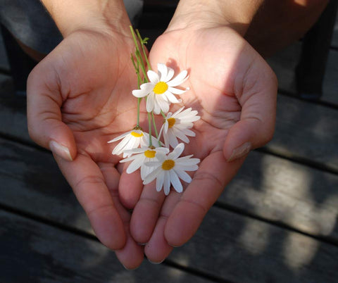 Two hands come together to form a heart with some daisies in the middle