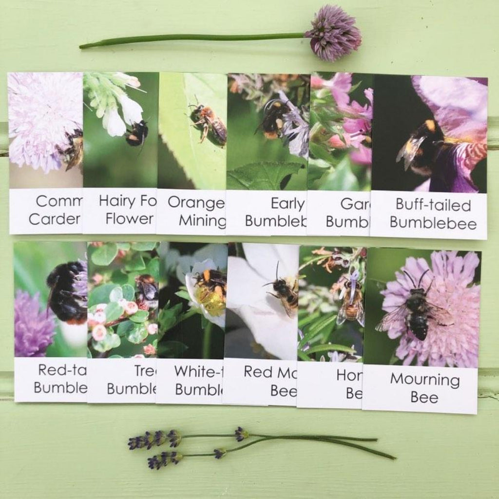 Bee Fact Cards for children