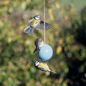 Birds eating from ashortwalk blue recycled plastic bird cake feeder