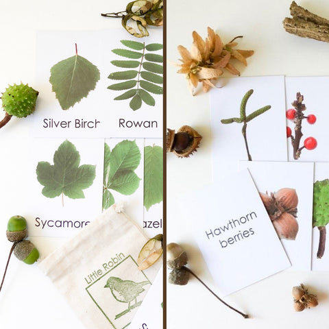 Little Robin Education Leaf Flashcards with Seeds and Berries ad-on