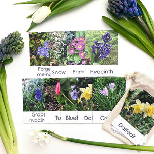 Little Robin Education Spring Flowers Flashcards