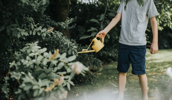 Boy using The Langley Sprinkler Watering Can in yellow