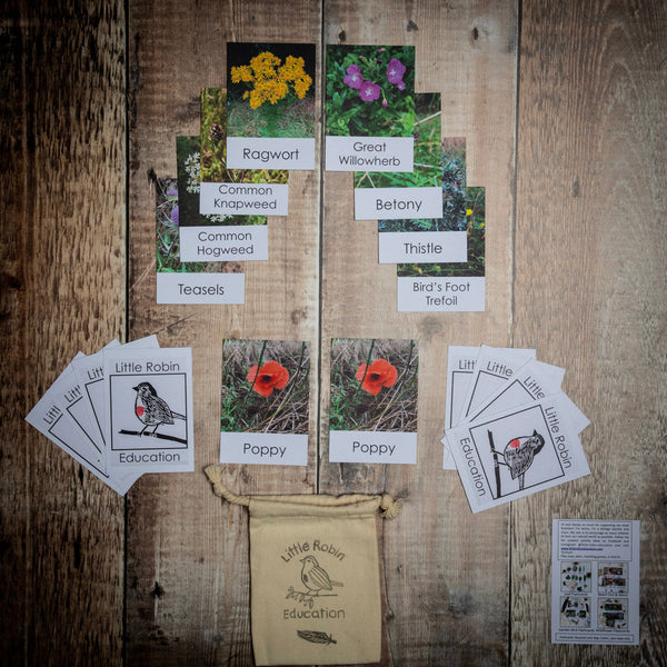 Little Robin Education wildflower flashcards contained in the Wildflower Explorer Kit