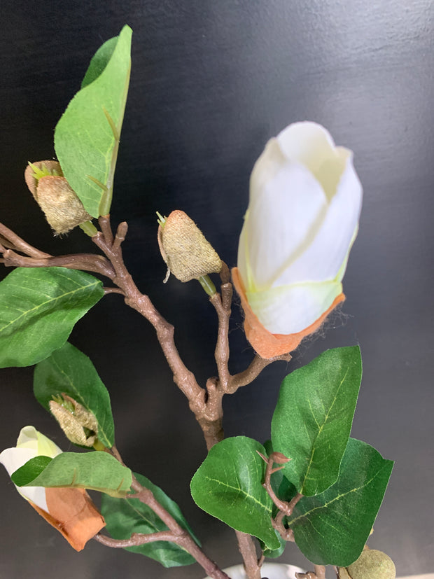 Cream Magnolia Flower Buds 820