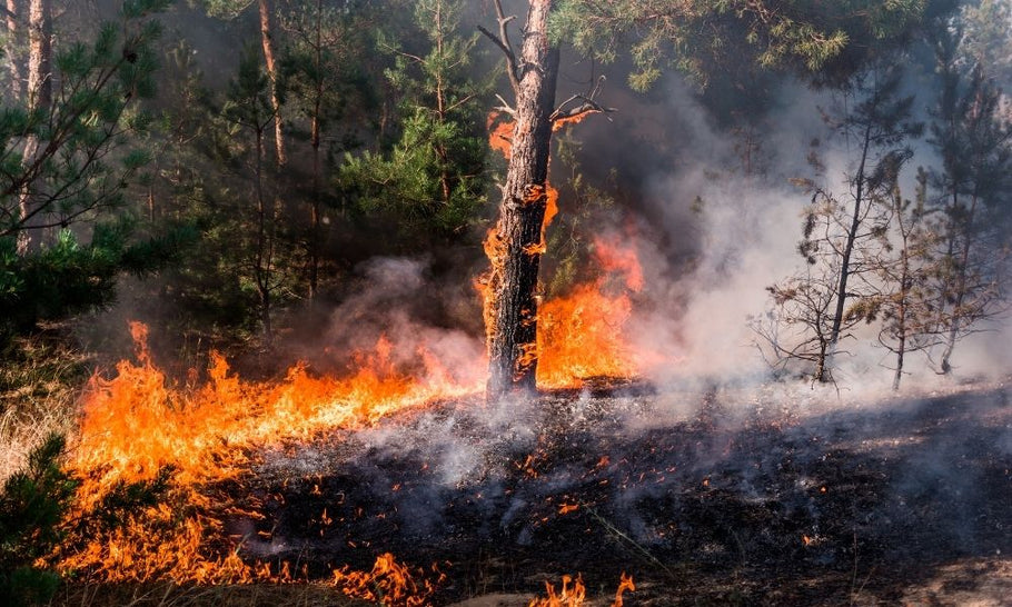 A Glossary of Wildland Fire Terminology