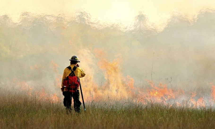 The Main Dangers That Wildland Firefighters Face