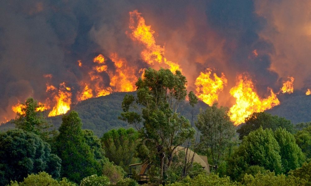 The Different Types of Wildland Fires
