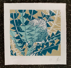 SCREEN PRINT - Banksia Baxteri Study 01. Edition of 7. Unframed.