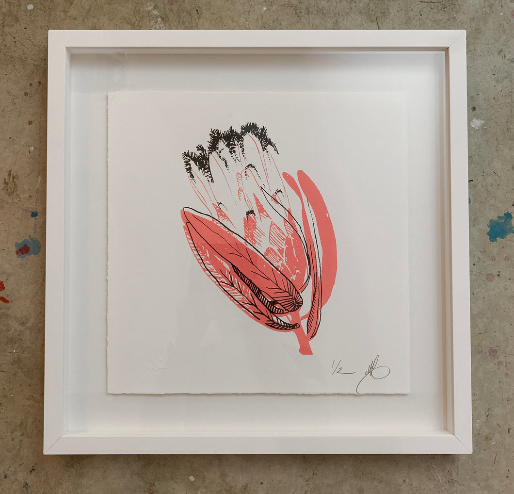 SCREEN PRINT -  Oiliander Protea Study 01. Edition of 2. Framed.