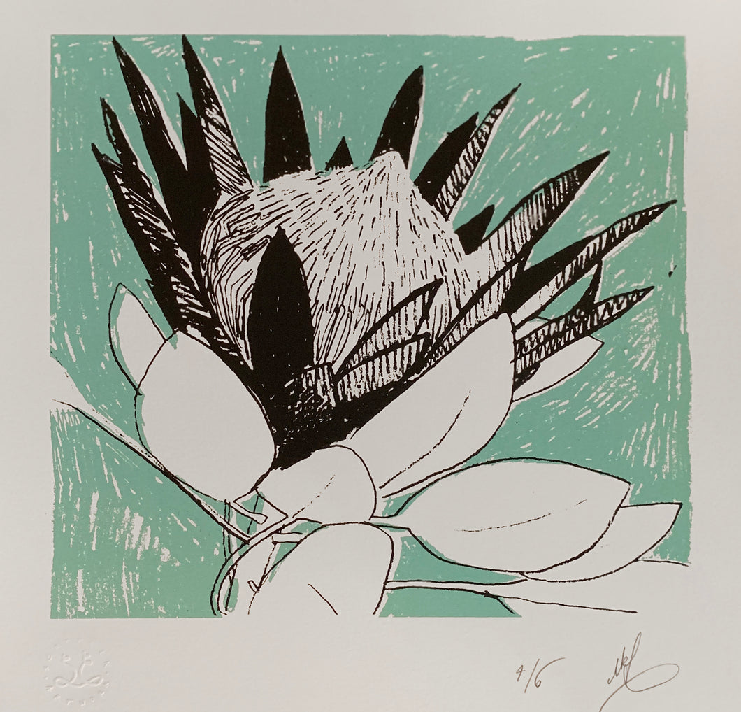 SCREEN PRINT -  King Protea Study 02.        Edition of 6. Unframed.
