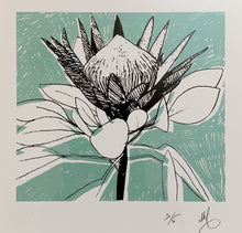 Load image into Gallery viewer, SCREEN PRINT - King Protea Study 01.      Edition of 6. Unframed.