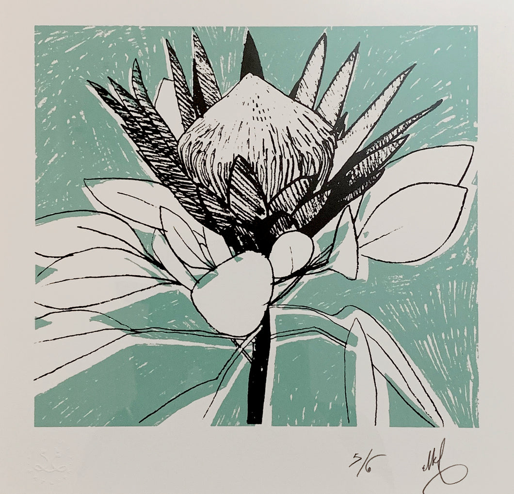 SCREEN PRINT - King Protea Study 01.      Edition of 6. Unframed.