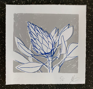 SCREEN PRINT - King Protea Closed Study 01.     Edition of 6. Unframed.