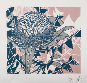 SCREEN PRINT - Banksia Baxteri Amy. Edition of 7. Unframed.