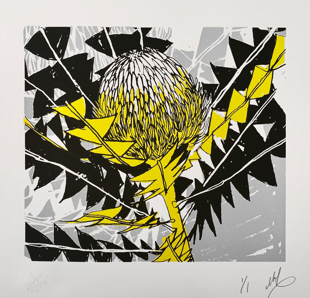Banksia Baxteri Noelene - Black & Yellow. Edition of 1. Unframed.