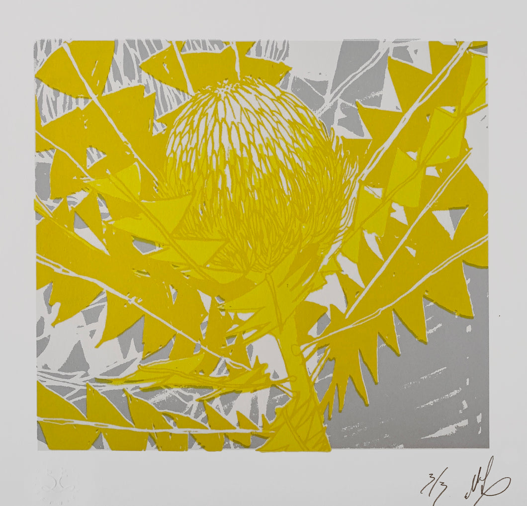 SCREEN PRINT - Banksia Baxteri Noelene - Yellow & Grey. Edition of 3. Unframed.
