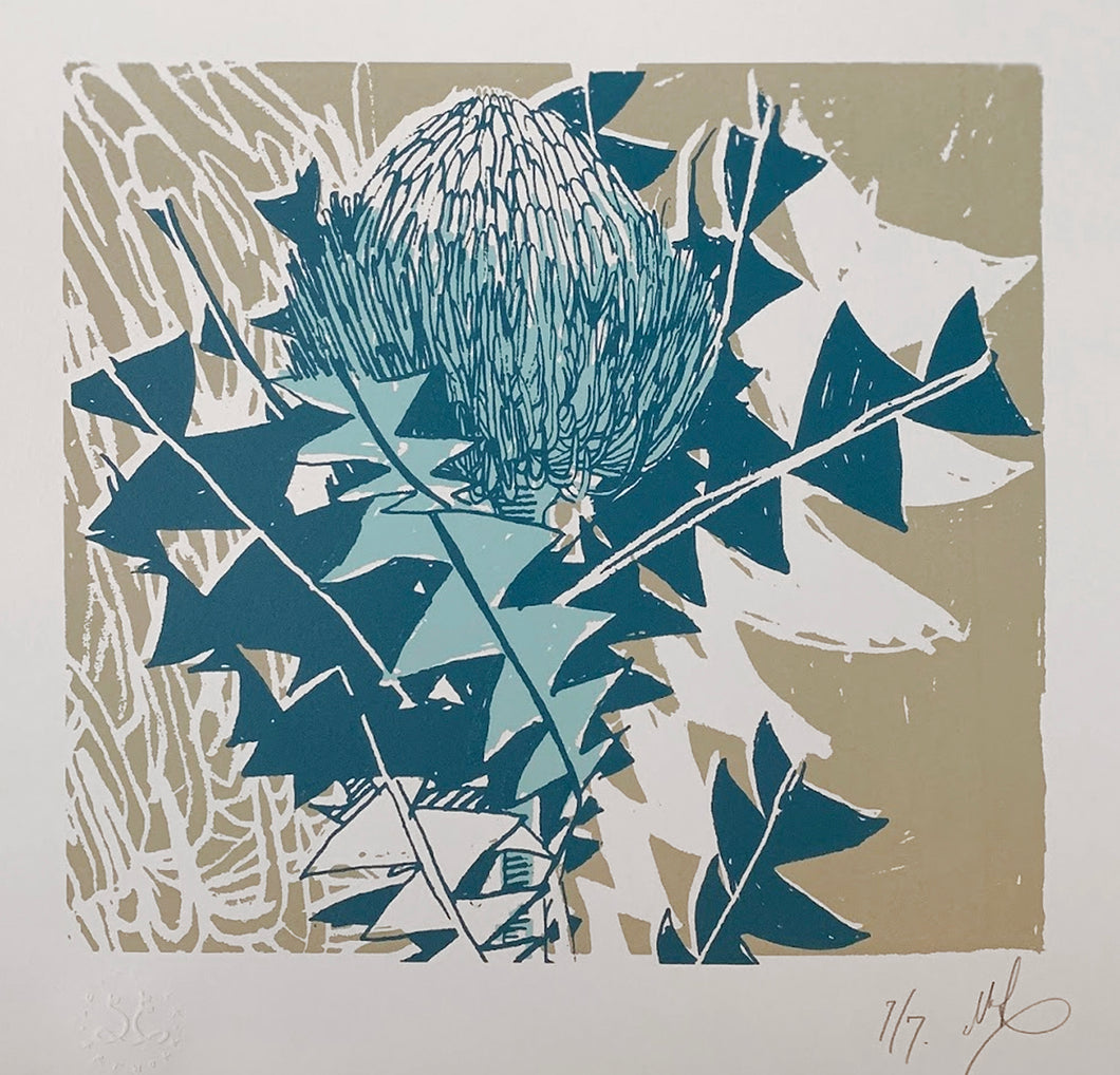 SCREEN PRINT - Banksia Baxteri Study 02. Edition of 7. Unframed.