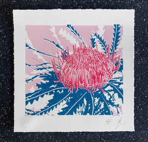 SCREEN PRINT - Banksia Formosa Study 01 - Pink & Blue. Edition of 6. Unframed.