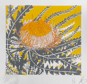 SCREEN PRINT - Banksia Formosa Study 02 - Yellow & Grey. Edition of 8. Unframed.
