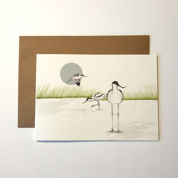 Avocet Greetings Card