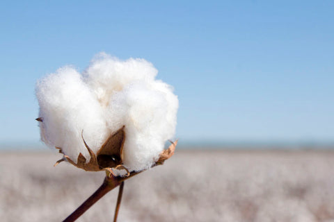 How To Care for Cotton