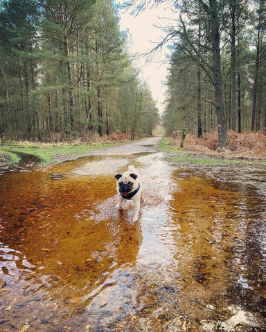 Dog in New forest #Travfurler