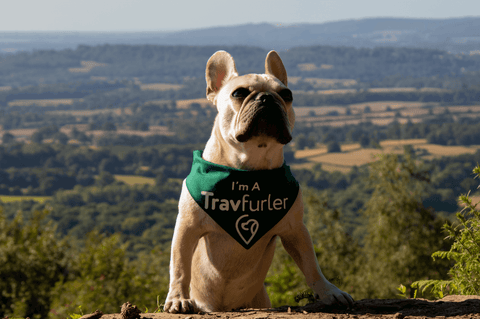 Frenchie Travfurler Bandana