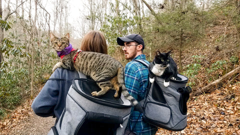 Backpacking with cats