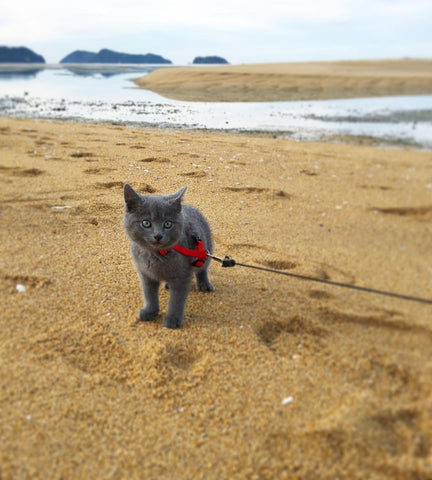 Nugget on the beach