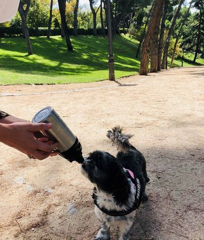 Pet water bottle for dog