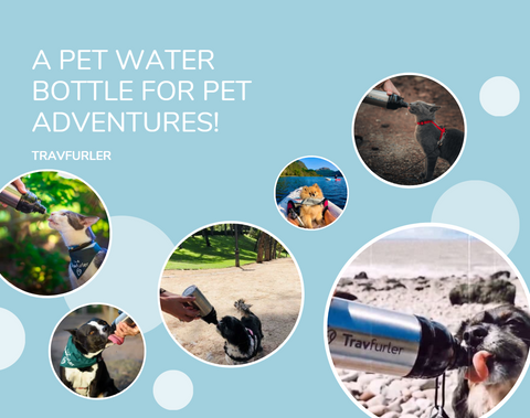 Pet water bottle adventures