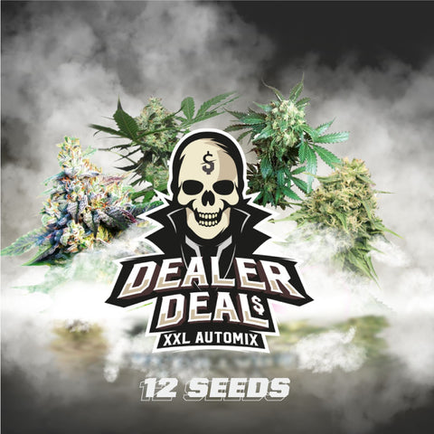 Dealer Deal XXL Automix X12