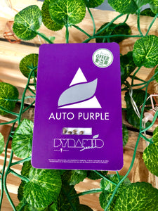 AUTO PURPLE 3+1 - PYRAMID SEEDS - De La Buena Growshop